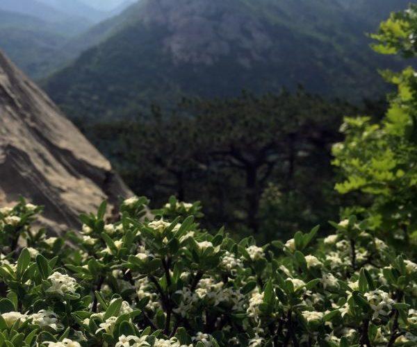 Endemic plant species